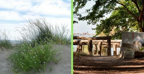 Immagini della Riserva Naturale di Ca'Roman