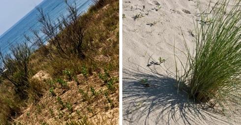 Oasi Dune Alberoni WWF