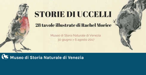 STORIE DI UCCELLI. 28 tavole illustrate di Rachel Morice