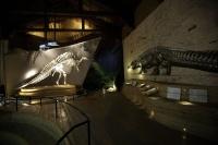 Museo di Storia Naturale Venezia