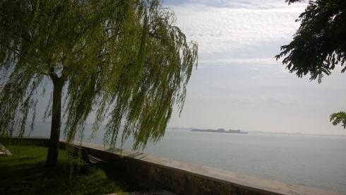 un salice sullo sgfondo della laguna veneziana