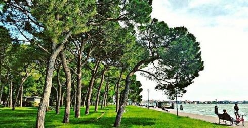 Pineta di Sant'Elena/Sant'Elena pinewood
